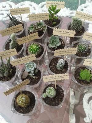 cactus para matrimonio, ecoregalo, souvenir cactus boda suculentas