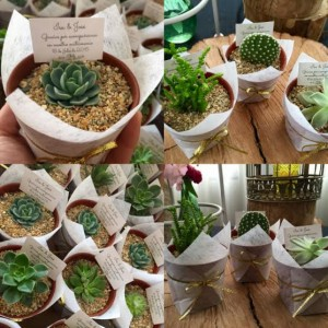 encintado natural cactus y suculentas original ecologico
