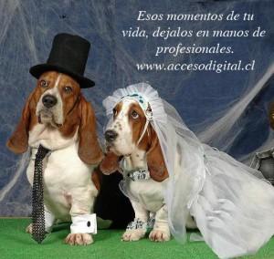 oferta fotos fotografías profesional matrimonios bodas eventos