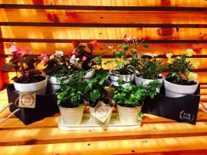 recuerdos de matrimonio, decoración relacionados con plantas