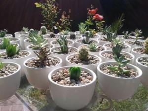 encintado original cactus y suculentas plantimas matrimonios bautizos