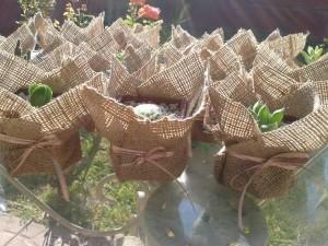 Recuerdos De Bautizo Con Cactus.Ecosouvenir Natural Original Plantitas Suculentas Y Cactus