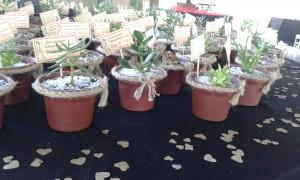 cactus y suculentas recuerdos para todo tipo de celebraciÓn